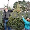 Splash of Color Christmas Tree Lot owner Al Haseman shows Gabriella Jensen, 4, of DeKalb a 7-foot tall balsam fir tree.