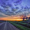 Flint Hills Sunset Tree
