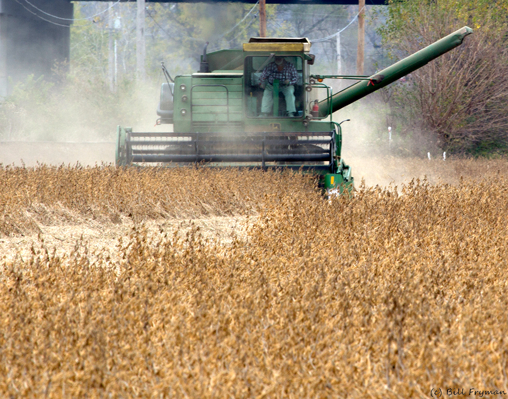Soy Bean Harvest -- Near Maryland Heights, MO