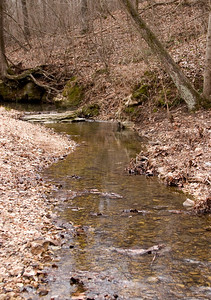 Stream at Babler Park