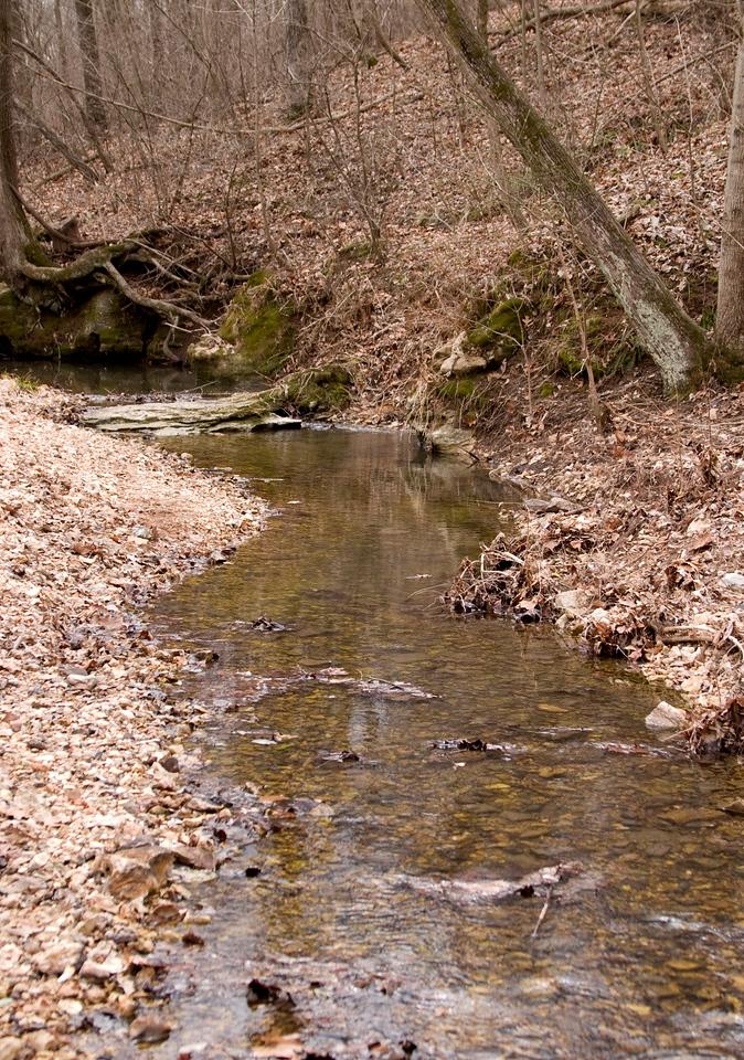 Stream at Babler Park