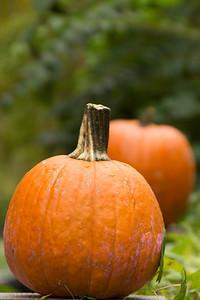 Gourds and pumpkins VII