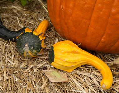 Gourds and pumpkins V