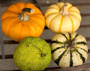 Gourds and pumpkins III
