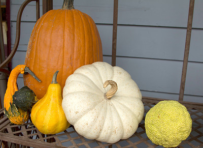 Gourds and pumpkins I