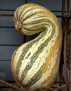 Gourds and pumpkins II