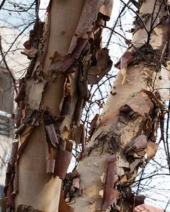 Trees in City Garden
