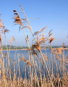 Marsh Foliage II