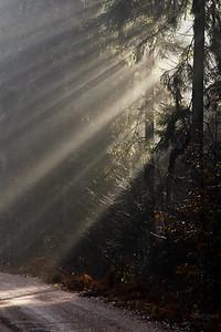 Światło w lesie Puszcza Białowieska ©Mateusz Matysiak