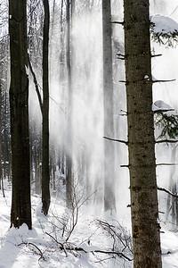 Leśne śniegospady w drzewostanie bukowo-jodłowym Bieszczady ©Mateusz Matysiak