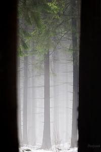 Brama do boru