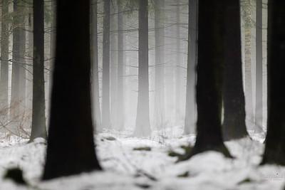 Bór świerkowy w Puszczy Białowieskiej ©Mateusz Matysiak