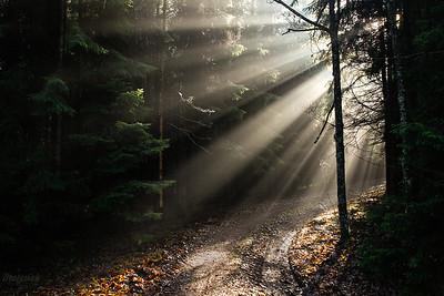 Światło w lesie ©Mateusz Matysiak