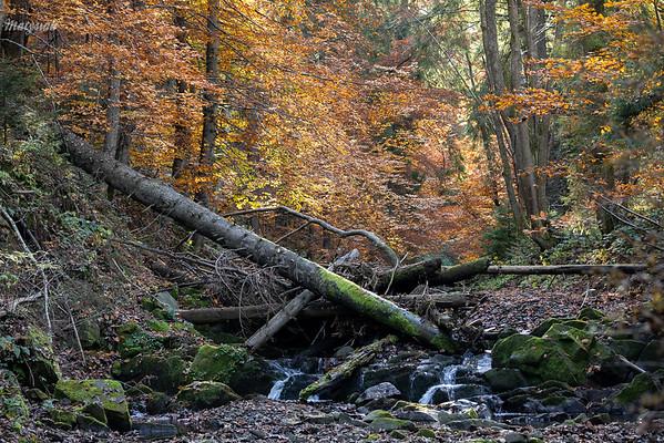 Potok Halicz, Bieszczady ©Mateusz Matysiak