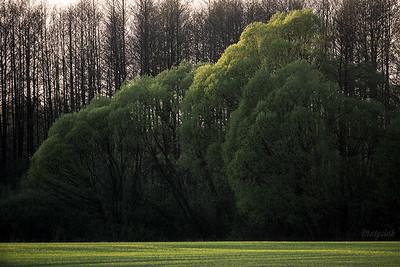 Kwietniowe zielenie