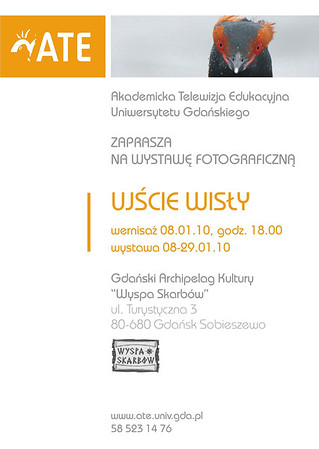 """Plakat zaproszenie na wystawę """"Ujście Wisły"""" 2010 z perkozem rogatym Mateusza Matysiaka"""