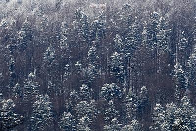 Zimowy las, Bieszczady ©Mateusz Matysiak