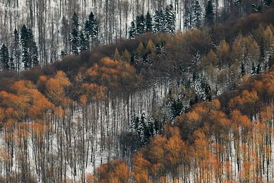Zimowy las na północnych stokach Połoniny Wetlińskiej Bieszczady ©Mateusz Matysiak