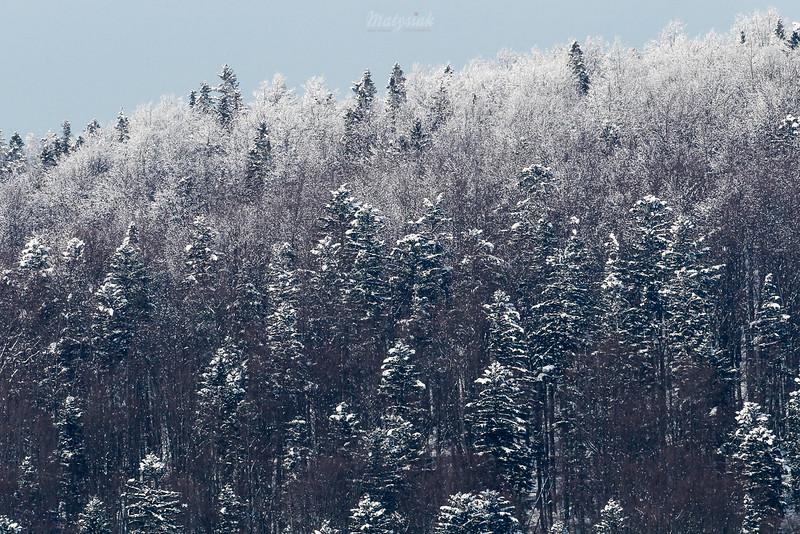 Zimowy las, Bieszczady<br /> ©Mateusz Matysiak