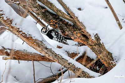 Zimowe grzybobranie