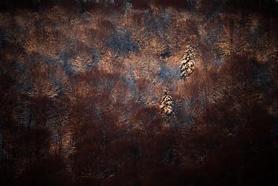 Zimowy las na stokach Otrytu Bieszczady ©Mateusz Matysiak