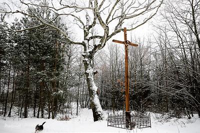 Krzyż pod brzozą