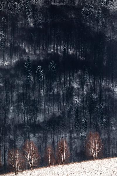 Zimowe brzozy Ryli z Otrytem w tle, Bieszczady ©Mateusz Matysiak