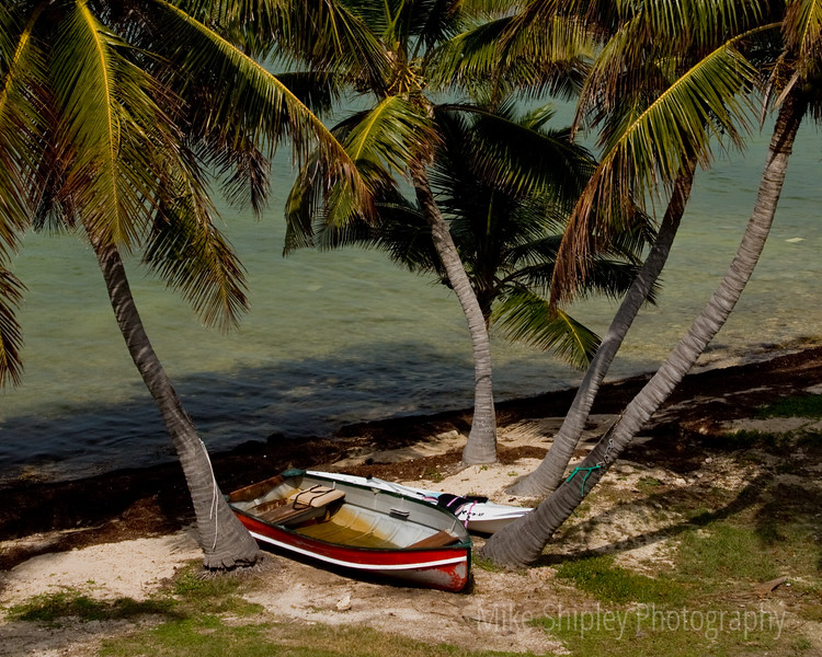 Boats under Palm, Pigeon Key, FK