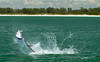 Tarpon Fight, Florida Keys