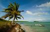 Palm in the Wind, Bahia Honda, FK