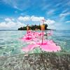 DSC04135 David Scarola Photography, Bahamas, May 2017