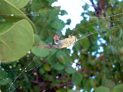 2004-12-16 Antigua