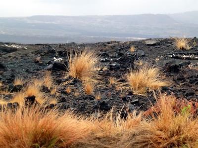 Pu'uhonua o Honuanau