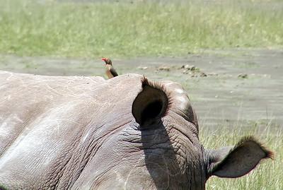 Lake Naivasha 2001-08-13