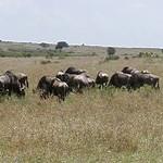 Masai Mara 2001-08-15