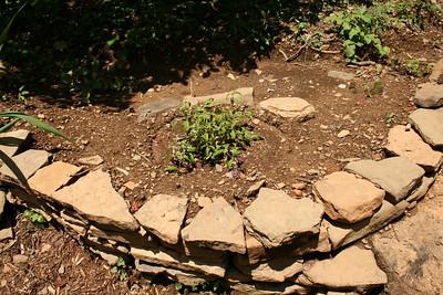Garden area - June.
