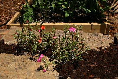 Flowers in rock wall by the garden - June.
