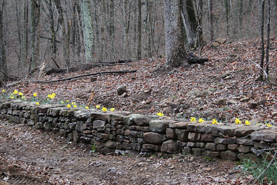Rock wall with daffodils.