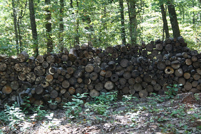 Wood pile - Sept 2009.