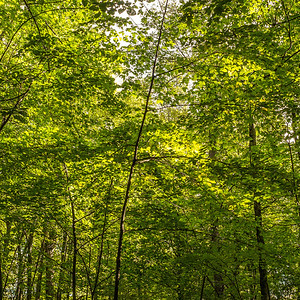 2013-09-24_Thornhill_Woods_Park_11