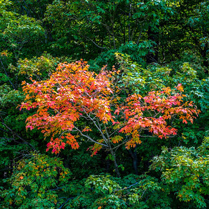 2013-09-24_Thornhill_Woods_Park_19