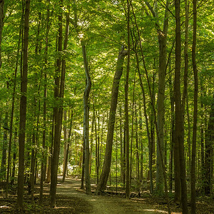 2013-09-24_Thornhill_Woods_Park_04
