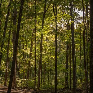 2013-09-24_Thornhill_Woods_Park_05
