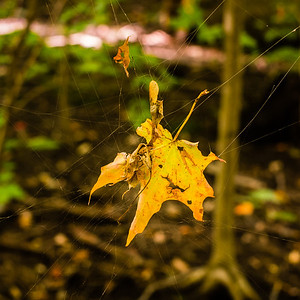 2013-09-24_Thornhill_Woods_Park_16