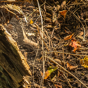 2013-09-24_Thornhill_Woods_Park_08