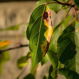 2013-09-25_Thornhill_14