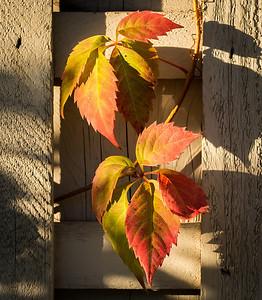 2013-09-25_Thornhill_16