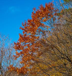 2013-11-03_Thornhill_Woods_Park_05