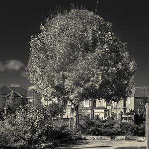 2013-11-03_Thornhill_Woods_Park_02