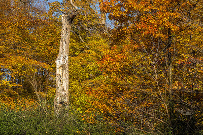 2013-11-03_Thornhill_Woods_Park_04
